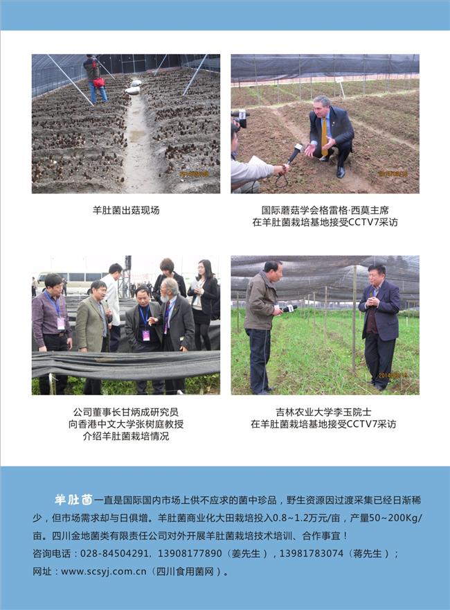 羊肚菌商业化栽培2_副本2.jpg