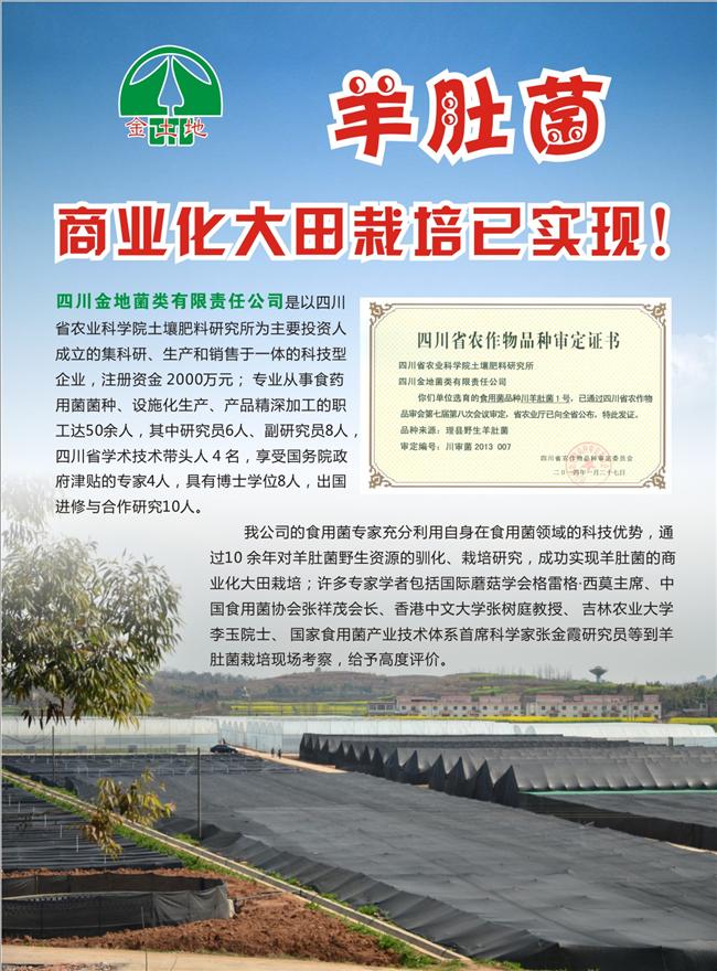 羊肚菌商业化栽培2_副本.jpg